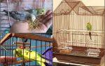 Как развлечь своего попугая и что для этого нужно