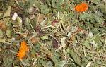 Травы и растения в питании шиншилл: какие можно и нельзя давать