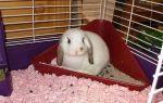 Как приучить кролика к лотку в домашних условиях