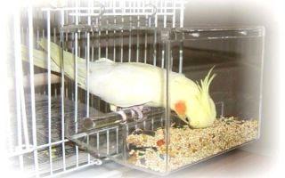 Кормушки для попугаев: выбор и изготовление самодельной кормушки