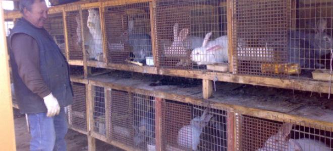 Как разводить и содержать кроликов в домашних условиях