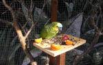 Почему попугай много ест и нормально ли это