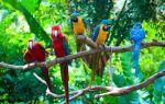 Как  и где живут попугаи в дикой природе