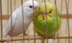 Как назвать попугая: красивые, красивые имена и клички для птицы