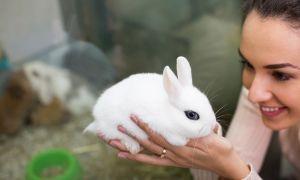 Сколько стоит кролик