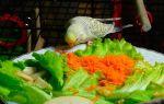 Какие овощи можно давать попугаю, как часто и сколько