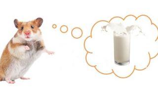 Можно ли хомякам молоко, творог, сметану и кефир