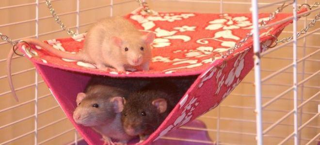 Самодельные и покупные гамаки для крыс