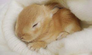 Сколько, когда и как спят кролики