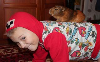 Как можно поиграть с морской свинкой: правила и советы