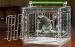 Подходящая переноска для любого попугая: выбор и изготовление