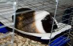 Гамак для морской свинки своими руками: пошаговая инструкция по изготовлению