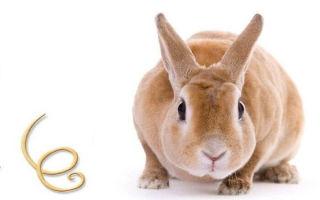Как появляются глисты у кроликов и чем лечить их от глистов