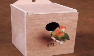 Гнездо для неразлучников: описание, размеры, изготовление своими руками