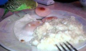 Можно ли давать попугаям яйцо, в каком виде и сколько