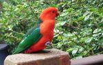 Попугаи родом из Австралии