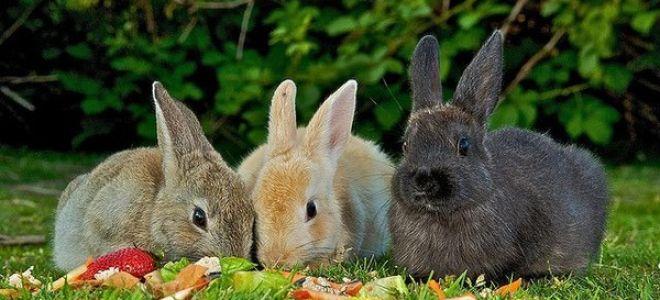 Чем и как правильно кормить кроликов: рекомендации экспертов