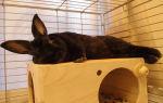 Как сделать домик для кролика своими руками: каким должно быть кроличье жилище