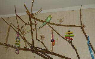 Ветки для попугаев: какие можно давать, а какие нельзя