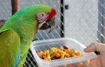 Можно ли попугаю дыню, сколько и почему