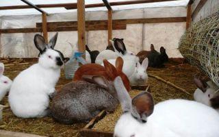 Как самостоятельно вырастить кроликов в домашних условиях
