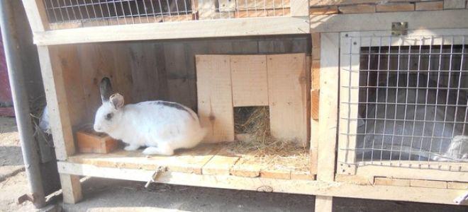 Создаем клетку для кроликов самостоятельно