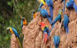 Все виды и породы попугаев с фотографиями и названиями