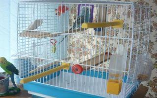 Что нужно попугаю в клетке и как обустроить дом для любимца