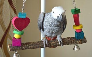 Нужны ли качели попугаям и зачем