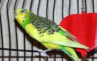 Почему попугая назвали попугаем