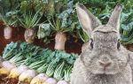 Можно ли кормить кроликов свёклой и какой именно