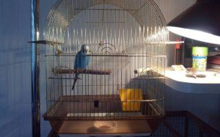 Какая лампа нужна для попугая