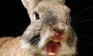 Почему кусаются кролики и как их отучить