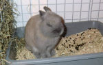 Что делать если у кролика запор