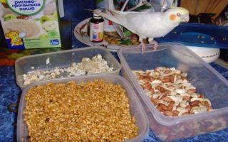 Чем кормить попугая кореллу в домашних условиях: правила составления рациона