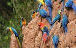 Сколько стоят попугаи и что влияет на их стоимость