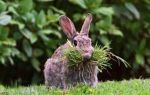 Какими травами и ветками можно и нельзя кормить кроликов