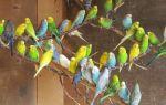 Как самостоятельно ухаживать за попугаем в домашних условиях