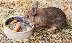 Почему кролик ничего не ест и не пьет