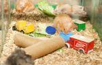 Как сделать игрушки для хомяка своими руками