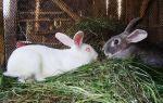 Почему крольчиха не хочет спариваться и не подпускает крола