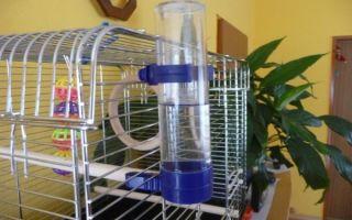 Выбор поилки для попугая: как сделать и установить в клетке