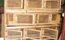 Оптимальные размеры клеток для кроликов