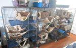 Домик для крысы своими руками: все что нужно знать для изготовления