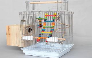 Какая должна быть клетка для попугая корелла: выбор и самостоятельное изготовление