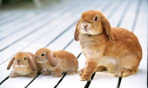Какие звуки издают кролики