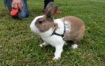 Как выбрать кролика при покупке