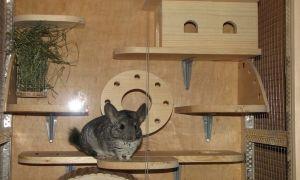 Как выбрать или сделать домик для шиншиллы своими руками