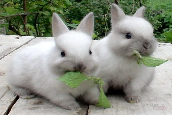Крольчата кушают крапиву
