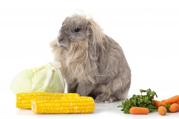 Питание взрослого кроля